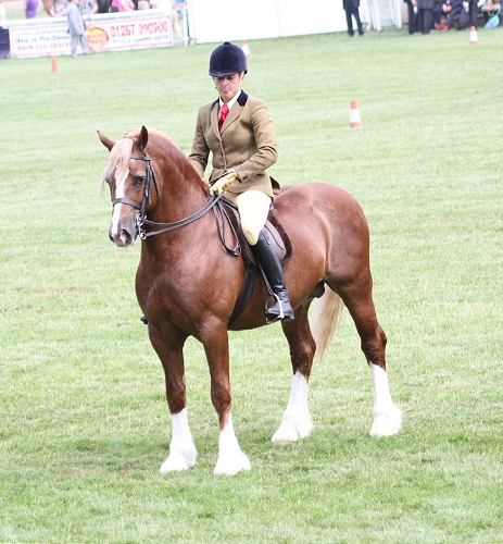 Menai Martino, Royal Welsh Show 2013